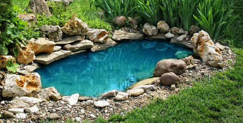 Small backyard pond in the garden.